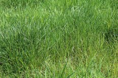 A Healthy Pasture in Late Spring