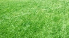 Lawn After Seeding