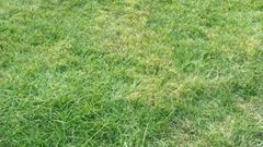 Lawn Before Seeding