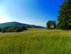 Tall Fescue Pasture