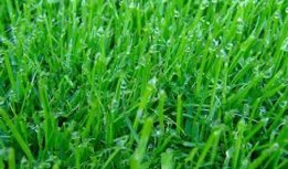 Wet Grass from Morning Dew