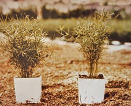 Bamboo Comparison