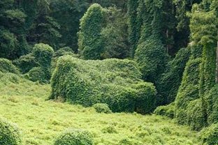 kudzu Completely Covering a House