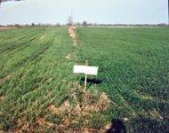 Grass Comparison Test