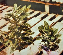 Plant Comparison