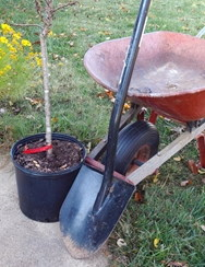 Container Tree, shovel, Wheelbarrel