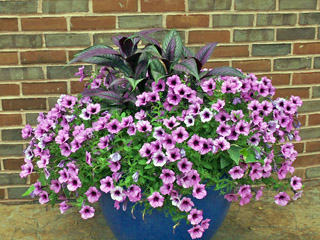 Flowers with Purple Color Schemes