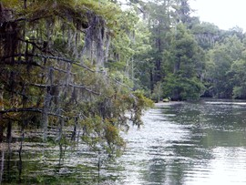 Sabine River Along The Texas/Louisiana Border