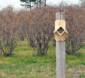Bamboo Bee Nesting Tubes with Bee House