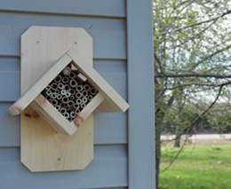Researching Native Bees in Missouri on beehive plans and designs, box house designs, food designs, bird designs, luxury pool house designs, signs designs, cat house designs,