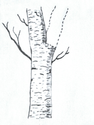 Pruning Problem Stem