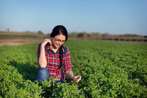 Girl in Alfalfa Field