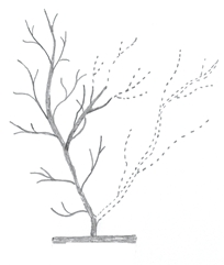 Removing Competing Leader on Small Tree