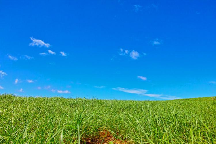 A New Field of Grass