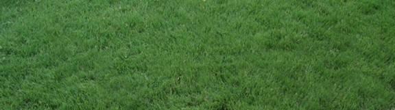 Buffalo Grass Lawns