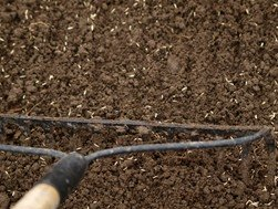 Raking Grass Seed into Soil