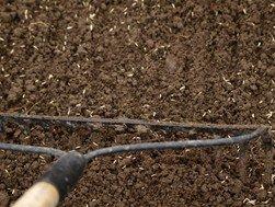 Raking Grass Seed into Soil