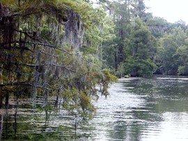 Sabine River Along The Texas/Louisiana Border