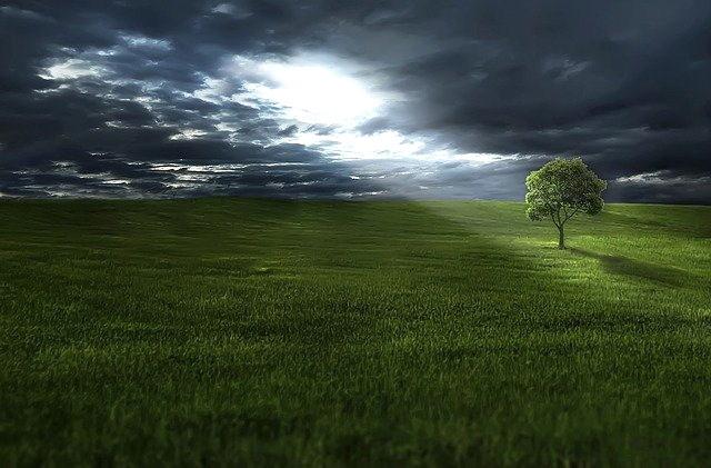 Sun's Rays on Tree in Field