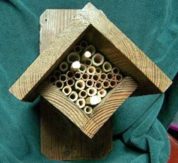 Diamond Shaped Mason Bee House