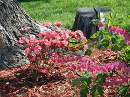 Blooming Hearts with Azaleas