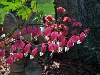 Bleeding Heart Flower Stems