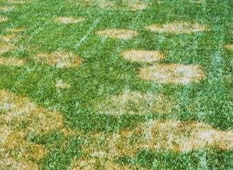 patch of grass turned brown