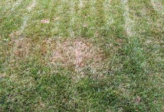 Diagnosing Lawn Dry Spots and Helpful Solutions