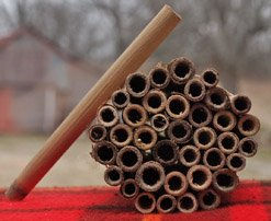Natural Reed Nesting Tubes for Mason/Leafcutter Bees
