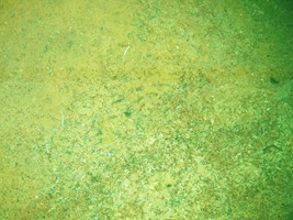 Green Pond Algae in Garden Pond