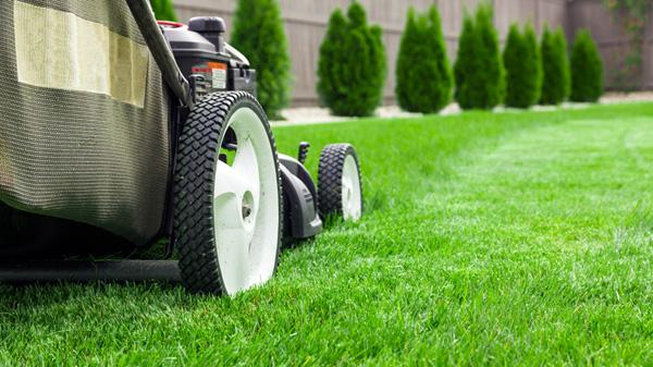 Push Mower on Lawn