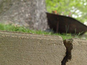 Broken retaining wall from Root Damage