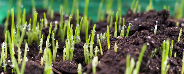 Biology of Grass Seed Germination - Steps of Seed Germination