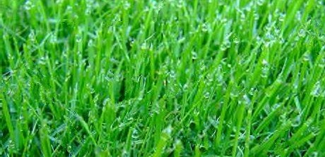 Freshly Watered Grass