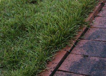 Zoysia Grass Lawns